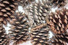 Macro abstrato dos cones do pinho isolados, vista ascendente próxima de cones do pinho para texturas, fundo do cone do pinho, tex Fotos de Stock