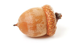 Macro of acorn Stock Images