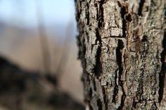 Macro albero, nel fondo Fotografia Stock