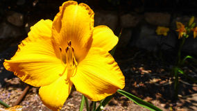 Macro amarilla hermosa de la flor imagen de archivo