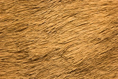 Macro of animal hide. Macro or close up of animal hide stock photography