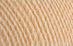 Macro of annual rings on wood cut. Yellow wood plank surface with annual rings Royalty Free Stock Photography