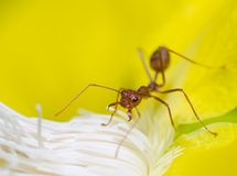 Macro of ant Stock Images