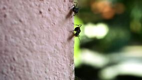 Macro ants moving on wall Royalty Free Stock Photos