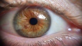Macro apple of the eye stock image