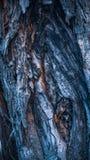 Macro approximatif color? de plan rapproch? de texture d'arbre photographie stock