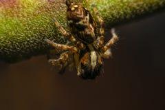 Macro araignée Images libres de droits