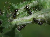 Macro araignée - dîner de luesha d'homme que je veux embrasser vos araignées et mites Photo stock