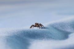 Macro araignée en gros plan de photo photos stock