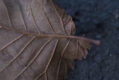 Macro Autumn Fall Leaf Detail do close-up Foto de Stock Royalty Free
