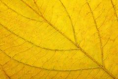 Macro of autumn leaf Royalty Free Stock Photo