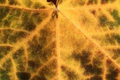 Macro of autumn leaf Stock Images