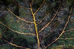 Macro of autumn leaf Royalty Free Stock Image