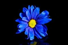 Macro azul de la flor Imagen de archivo