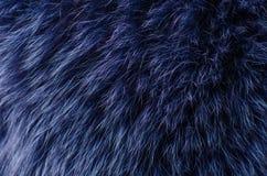 Macro azul de la piel fotografía de archivo libre de regalías