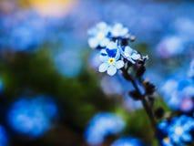 Macro azul hermosa de la flor Fotos de archivo libres de regalías