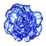 Macro azul marino surrealista de la flor del amor del  del cromo Ñ aislada imagen de archivo libre de regalías