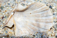 Macro of the back of a clear and brownish shell on the beach on. The sand stock photos