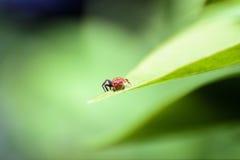 Macro Backdrounds d'araignée Photographie stock libre de droits