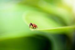 Macro Backdrounds d'araignée Images libres de droits