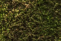 Macro background of forest tree moss close Stock Photography