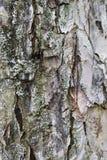 Macro background of gray bark of the tree Royalty Free Stock Image