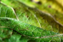 Macro background green leaf. Selective focus Royalty Free Stock Photos