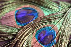 Macro background texture of colorful peacock feathers. In horizontal frame stock photography
