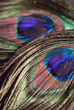 Macro background texture of colorful peacock feathers. In vertical frame royalty free stock photos
