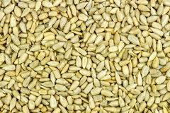 Macro background texture of tasty fresh sunflower seeds Royalty Free Stock Photos