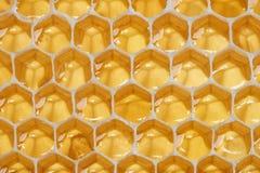 Macro of backlit honeycomb Royalty Free Stock Photography