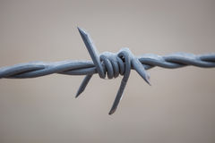 Macro barbed wire with ice Stock Photography