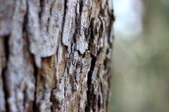Macro Bark Stock Photo