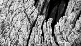 Macro of a bark of olive tree Royalty Free Stock Images