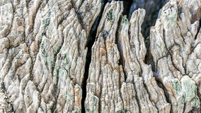 Macro of a bark of olive tree Stock Image