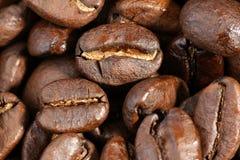 Macro beans Stock Images
