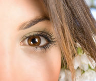The macro beautiful female eye Royalty Free Stock Photography