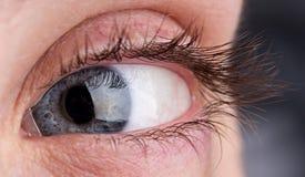 Macro of beautiful grey eye Royalty Free Stock Images