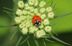 Macro. Beautiful macro shot in garden Varna stock image