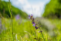 Macro of a beautiful purple plant. On sunny day stock images