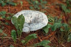Macro of beautiful small forest mushroom Stock Photo
