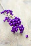 Macro of beautyberry twig Stock Photos