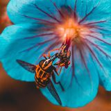 Macro. Bee on the flower Royalty Free Stock Images