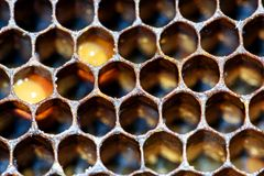 Macro Bee Hive Honeycomb Interior Pattern. Closeup macro of yellow bee honeycomb in a hexagon pattern with sealed golden sweet honey compartments of the hive royalty free stock photo