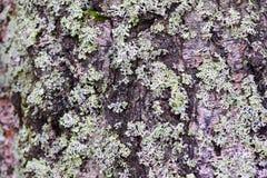 Macro : belle mousse sur un arbre Image stock