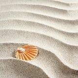 Macro bianca del mollusco delle coperture della perla della sabbia della spiaggia Immagini Stock
