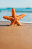 Macro big orange starfish on the seashore Royalty Free Stock Photo