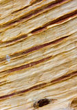 Macro birch bark view Stock Photography