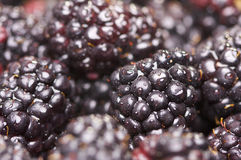 Macro Blackberries with Water Drops Royalty Free Stock Photography