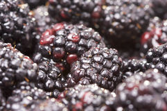 Macro Blackberries with Water Drops Stock Images